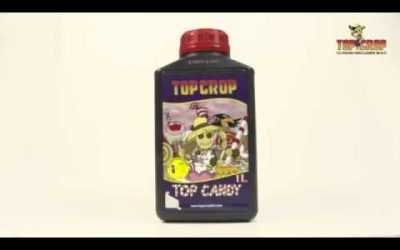 Top Candy. Top Crop